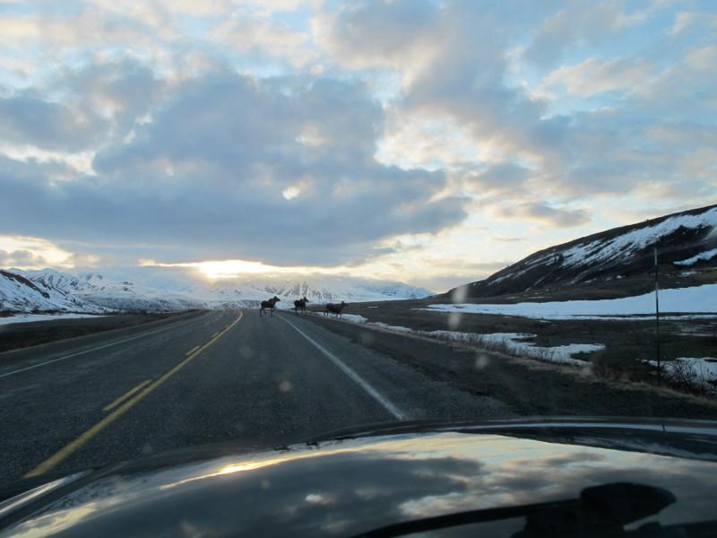 Road_trip_800